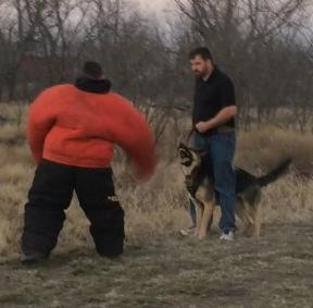 Personal Protection Training in Abilene, TX. vanBuren Shepherds. 325-660-942