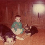 baby with german shepherds