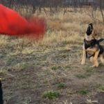 Guard dog training Abilene, tx