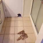 dog ate through door